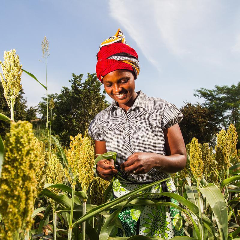 http://dynapharmafrica.net/uganda/wp-content/uploads/2018/08/membership-package-DI-grow-1.jpg
